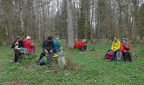 Artikelbild zu Artikel Blumentour I – Vorfrühling am Taubenberg